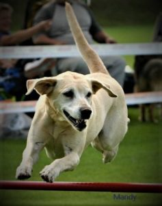 Geier Sportseminare, Online -Seminare, Agility, Giftkoeder,Dogdance,RO,